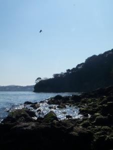 Die Vögel kreisen über Sarushima.
